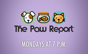 Paw Report